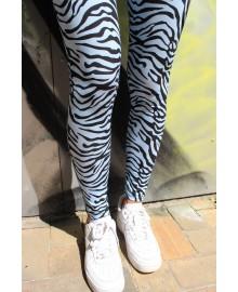 Light blue zebra